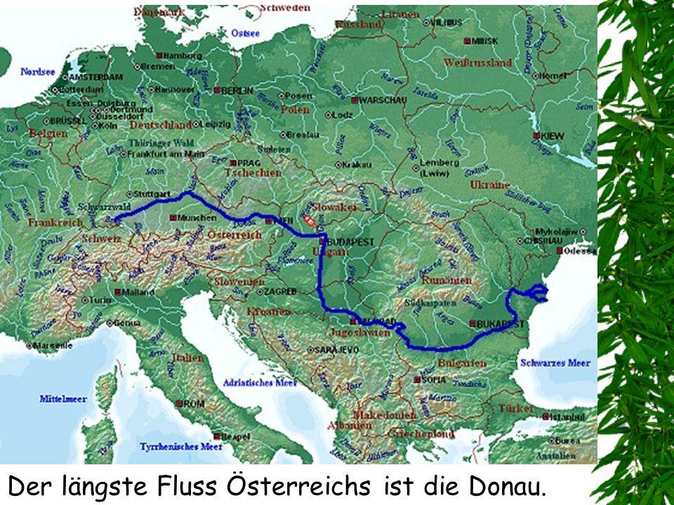 Der längste Fluss Österreichs ist die Donau.