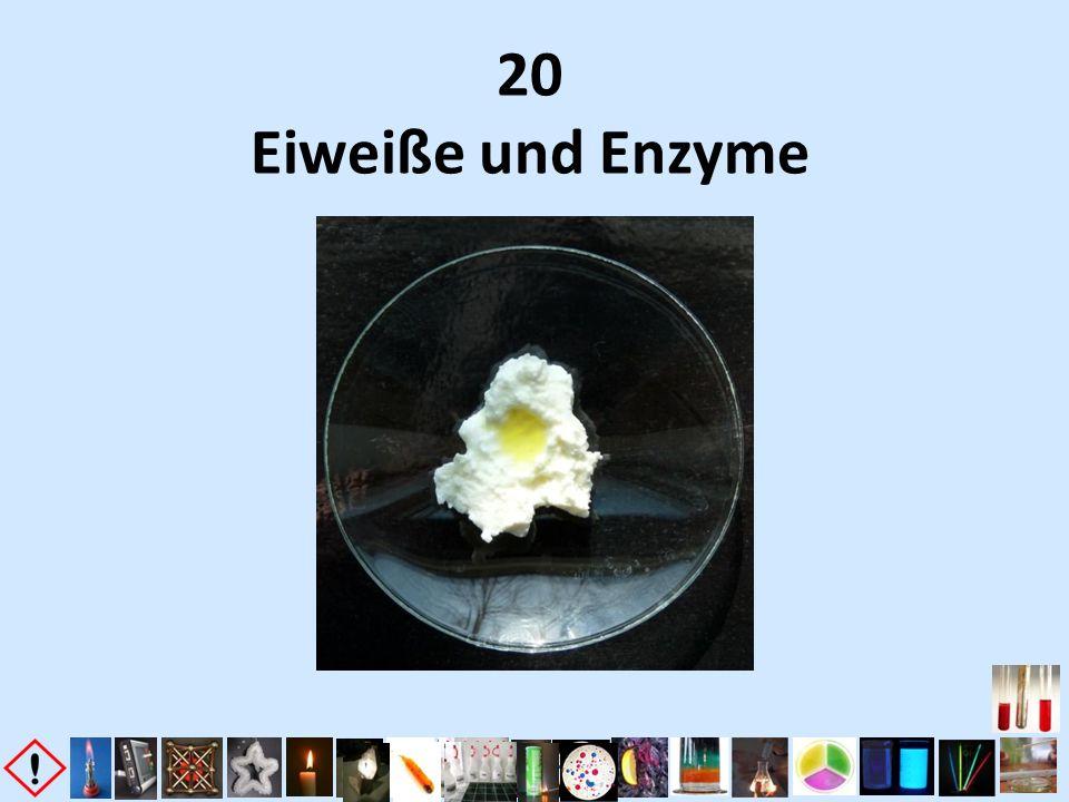 20 Eiweiße und Enzyme