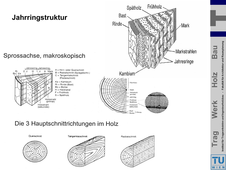 Trag Werk Holz Bau Institut für Tragwerkslehre und Ingenieurholzbau - Fakultät für Architektur und Raumplanung Trag Werk Holz Bau Institut für Tragwerkslehre und Ingenieurholzbau - Fakultät für Architektur und Raumplanung Jahrringstruktur