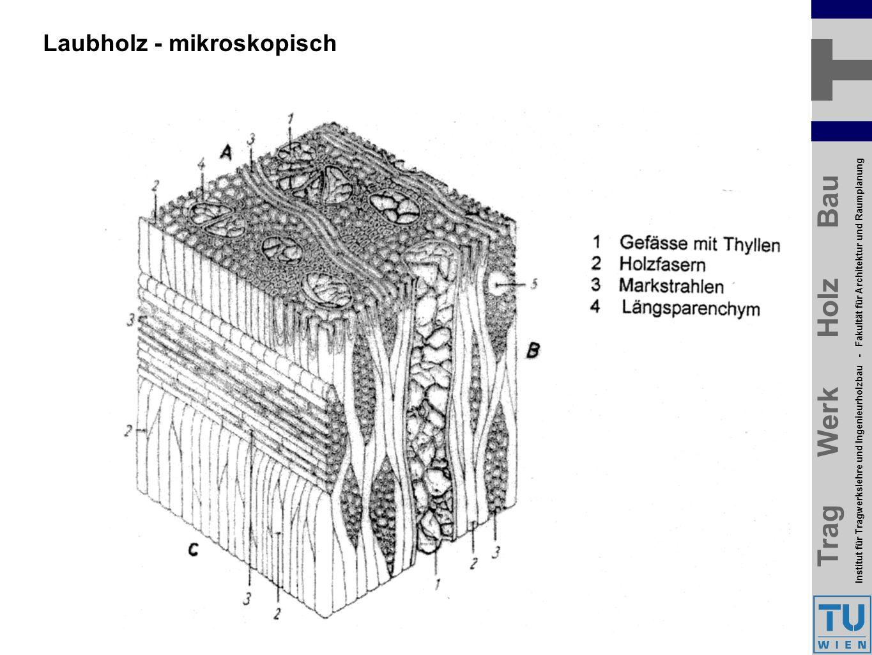 Trag Werk Holz Bau Institut für Tragwerkslehre und Ingenieurholzbau - Fakultät für Architektur und Raumplanung Trag Werk Holz Bau Institut für Tragwerkslehre und Ingenieurholzbau - Fakultät für Architektur und Raumplanung Laubholz - mikroskopisch