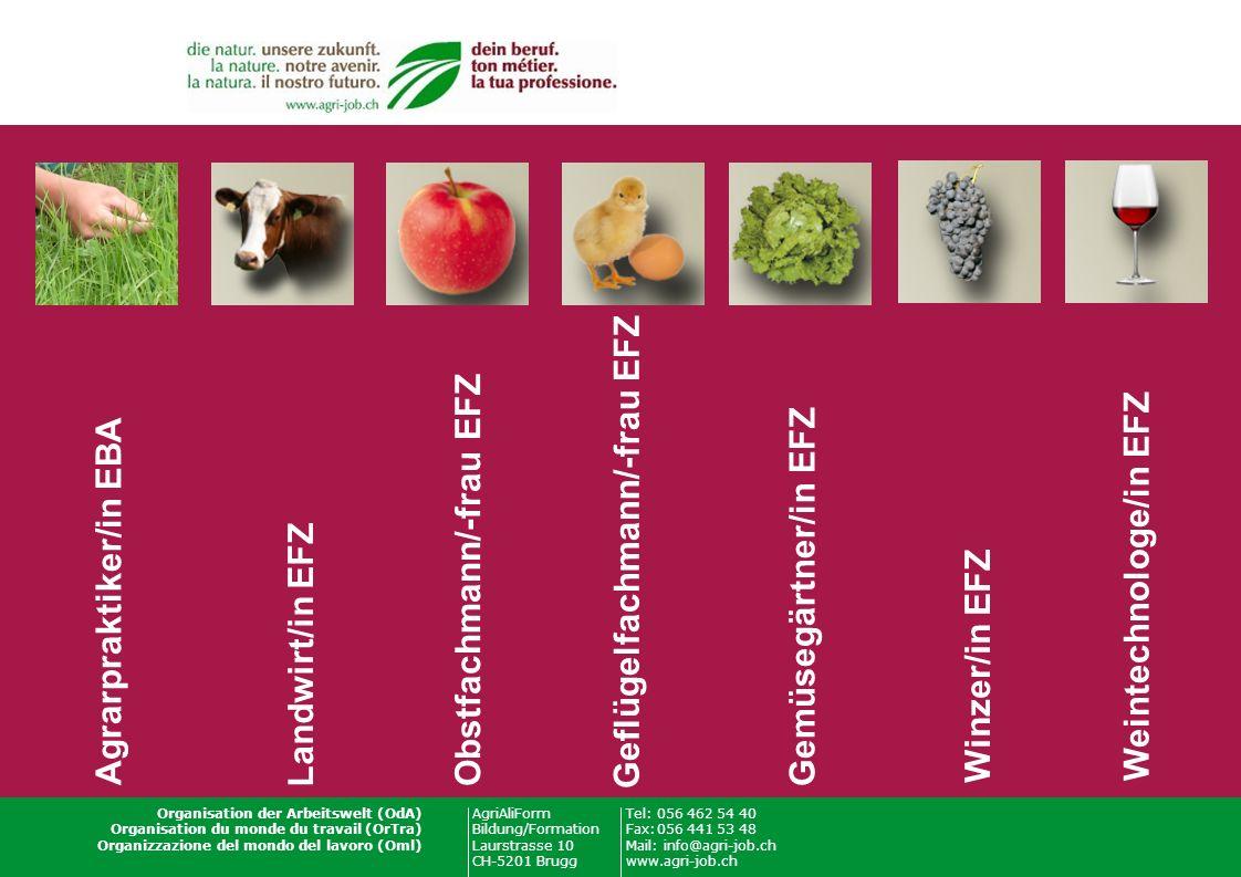 AgriAliForm Bildung/Formation Laurstrasse 10 CH-5201 Brugg Tel:056 462 54 40 Fax:056 441 53 48 Mail: info@agri-job.ch www.agri-job.ch Organisation der Arbeitswelt (OdA) Organisation du monde du travail (OrTra) Organizzazione del mondo del lavoro (Oml) Landwirt/in EFZ Agrarpraktiker/in EBA Obstfachmann/-frau EFZ Geflügelfachmann/-frau EFZ Gemüsegärtner/in EFZ Winzer/in EFZ Weintechnologe/in EFZ
