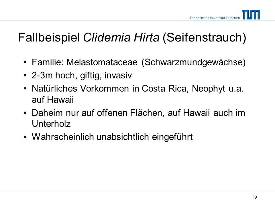 Technische Universität München 19 Fallbeispiel Clidemia Hirta (Seifenstrauch) Familie: Melastomataceae (Schwarzmundgewächse) 2-3m hoch, giftig, invasiv Natürliches Vorkommen in Costa Rica, Neophyt u.a.