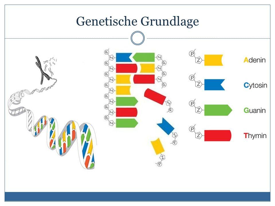 Genetische Grundlage
