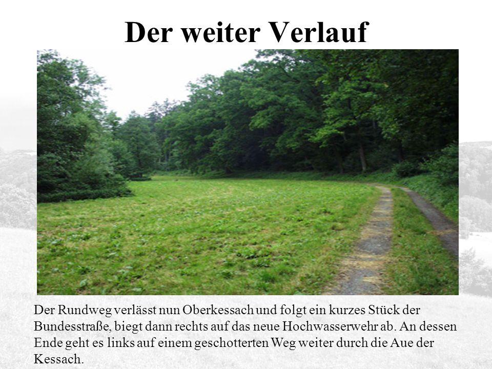 Der Rundweg verlässt nun Oberkessach und folgt ein kurzes Stück der Bundesstraße, biegt dann rechts auf das neue Hochwasserwehr ab.