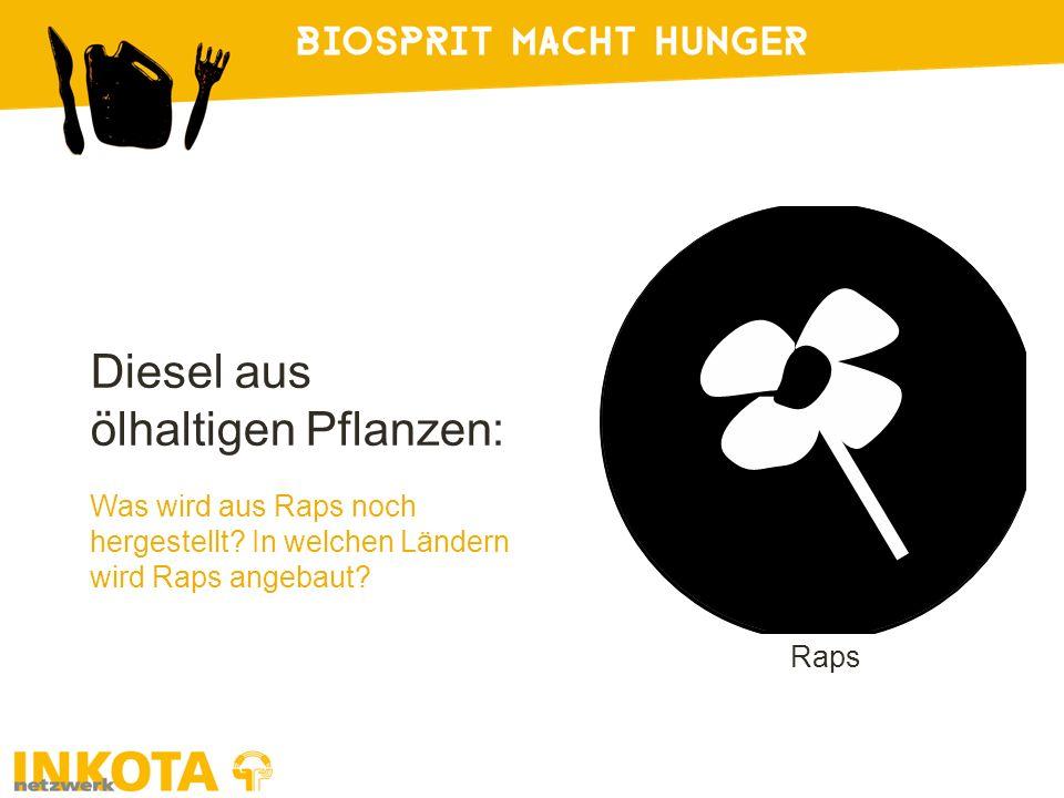 Diesel aus ölhaltigen Pflanzen: Was wird aus Raps noch hergestellt.