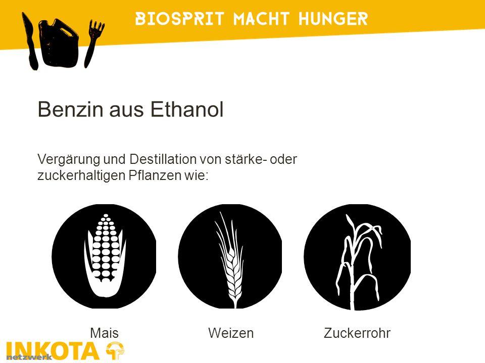 Benzin aus Ethanol Vergärung und Destillation von stärke- oder zuckerhaltigen Pflanzen wie: MaisWeizenZuckerrohr