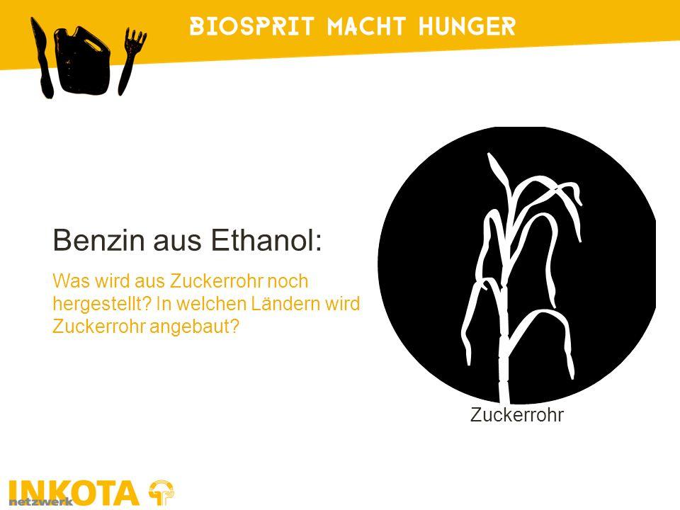 Zuckerrohr Benzin aus Ethanol: Was wird aus Zuckerrohr noch hergestellt? In welchen Ländern wird Zuckerrohr angebaut?