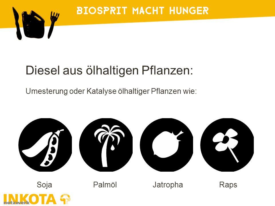 SojaPalmölJatrophaRaps Diesel aus ölhaltigen Pflanzen: Umesterung oder Katalyse ölhaltiger Pflanzen wie: