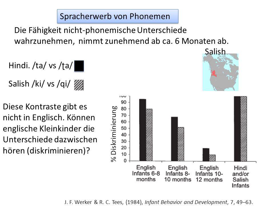 Spracherwerb von Phonemen Die Fähigkeit nicht-phonemische Unterschiede wahrzunehmen, nimmt zunehmend ab ca.