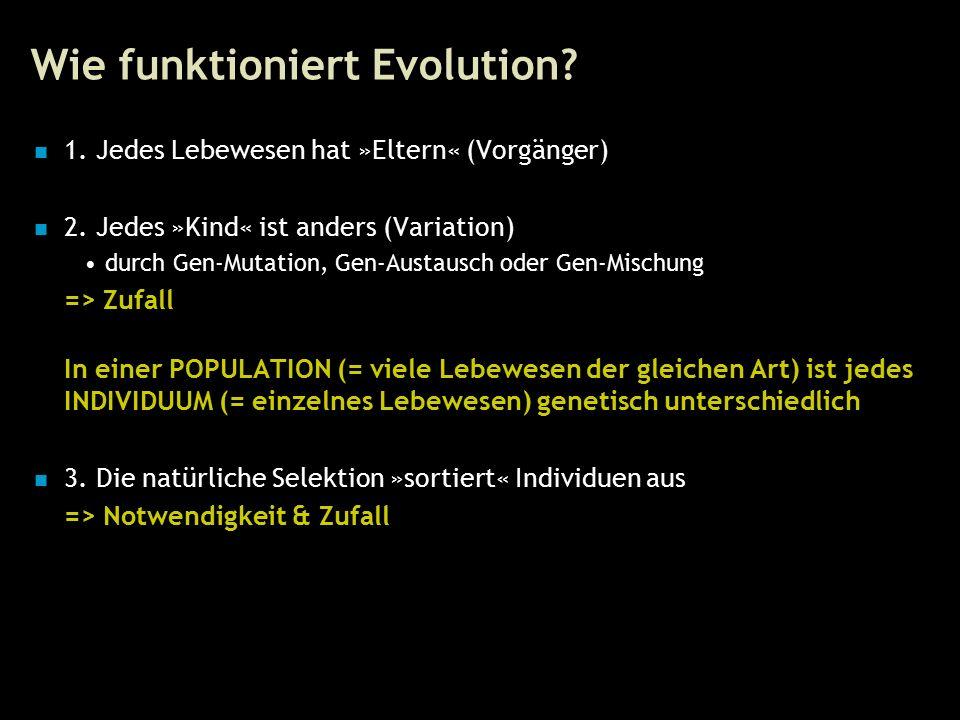 14 Wie funktioniert Evolution. 1. Jedes Lebewesen hat »Eltern« (Vorgänger) 2.
