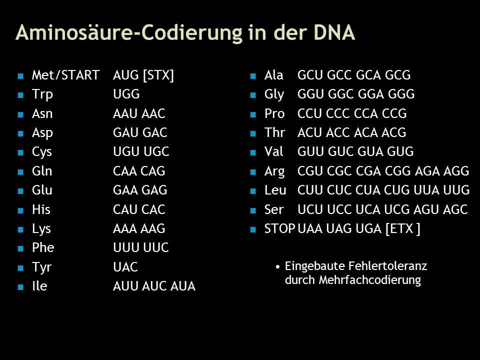 23 Aminosäure-Codierung in der DNA Met/STARTAUG [STX] TrpUGG AsnAAU AAC AspGAU GAC CysUGU UGC GlnCAA CAG GluGAA GAG HisCAU CAC LysAAA AAG PheUUU UUC TyrUAC IleAUU AUC AUA AlaGCU GCC GCA GCG GlyGGU GGC GGA GGG ProCCU CCC CCA CCG ThrACU ACC ACA ACG ValGUU GUC GUA GUG ArgCGU CGC CGA CGG AGA AGG LeuCUU CUC CUA CUG UUA UUG SerUCU UCC UCA UCG AGU AGC STOPUAA UAG UGA [ETX ] Eingebaute Fehlertoleranz durch Mehrfachcodierung