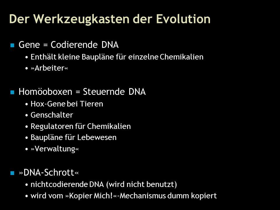 24 Der Werkzeugkasten der Evolution Gene = Codierende DNA Enthält kleine Baupläne für einzelne Chemikalien »Arbeiter« Homöoboxen = Steuernde DNA Hox-Gene bei Tieren Genschalter Regulatoren für Chemikalien Baupläne für Lebewesen »Verwaltung« »DNA-Schrott« nichtcodierende DNA (wird nicht benutzt) wird vom »Kopier Mich!«-Mechanismus dumm kopiert