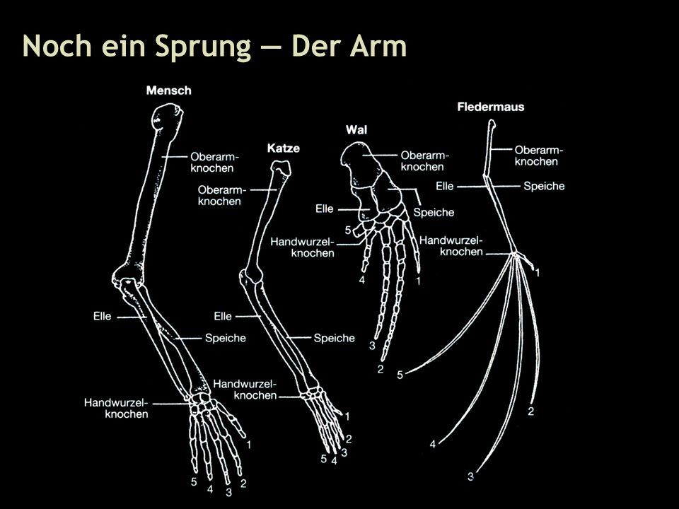 33 Noch ein Sprung — Der Arm