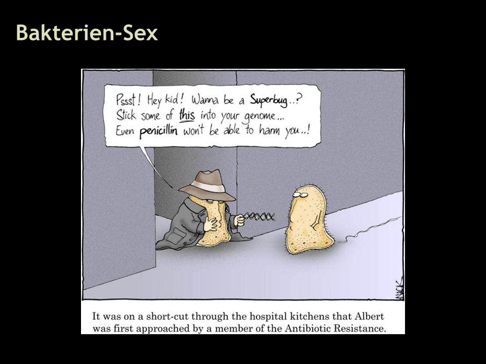40 Bakterien-Sex