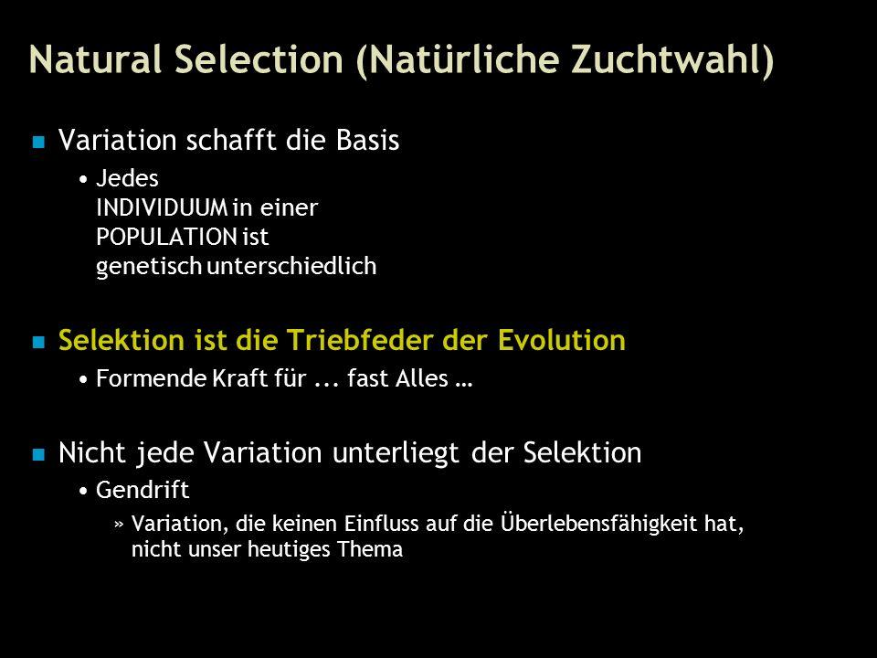 48 Natural Selection (Natürliche Zuchtwahl) Variation schafft die Basis Jedes INDIVIDUUM in einer POPULATION ist genetisch unterschiedlich Selektion ist die Triebfeder der Evolution Formende Kraft für...