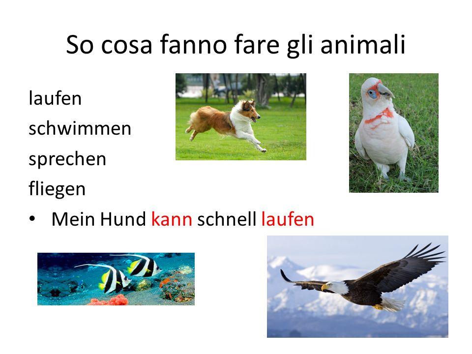 So cosa fanno fare gli animali laufen schwimmen sprechen fliegen Mein Hund kann schnell laufen