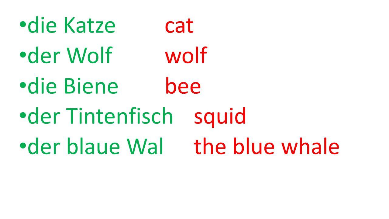 die Katze cat der Wolf wolf die Biene bee der Tintenfisch squid der blaue Walthe blue whale