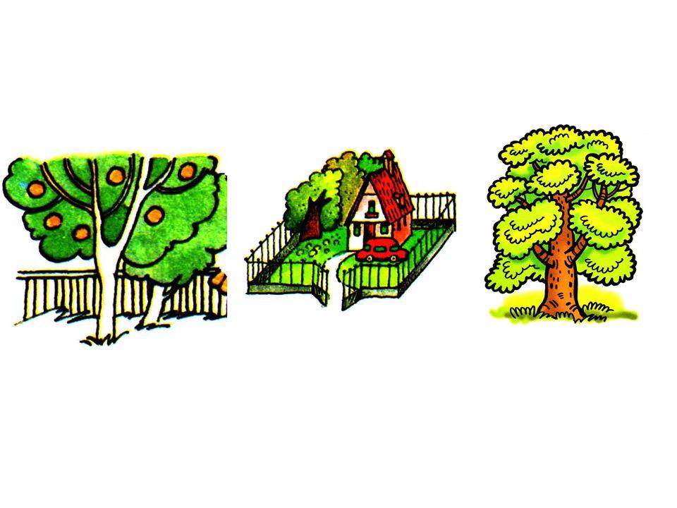 der Garten der Hof der Baum