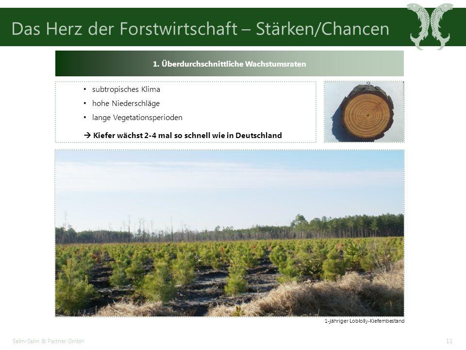Das Herz der Forstwirtschaft – Stärken/Chancen Salm-Salm & Partner GmbH11 1-jähriger Loblolly-Kiefernbestand 1.