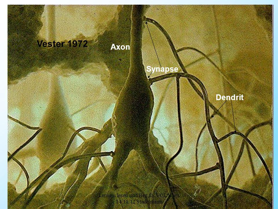 7 Referat Synapse Axon Dendrit Vester 1972 Lernen, lesen und Beg.fö. VCL Wien 14.11.12 Stadelmann