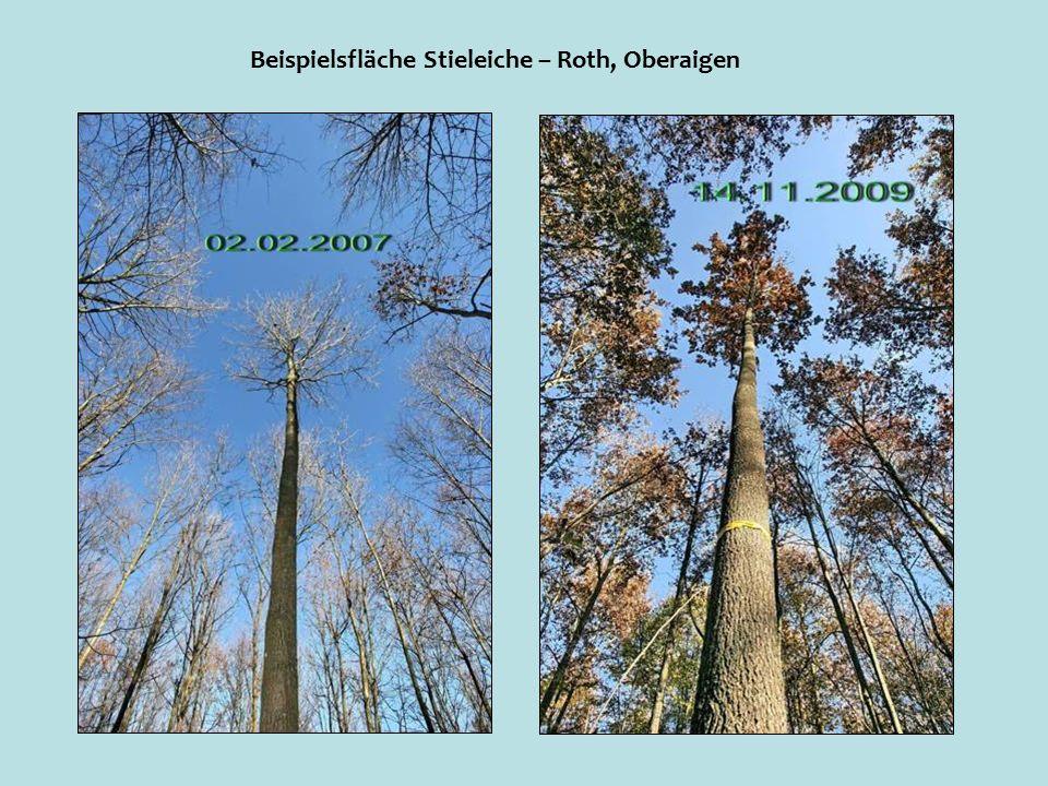 Beispielsfläche Stieleiche – Roth, Oberaigen
