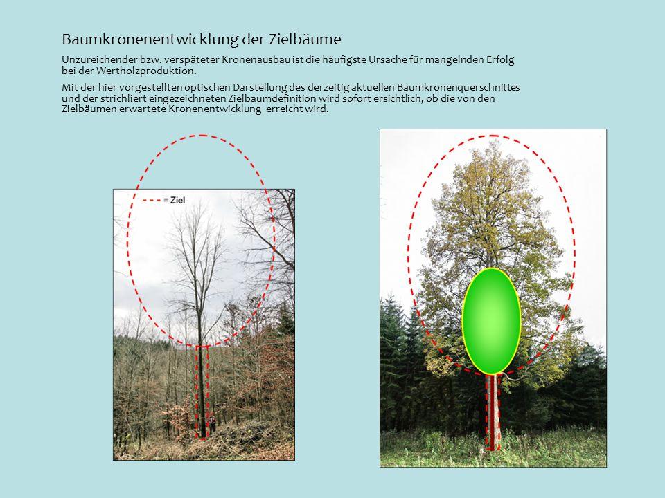 Baumkronenentwicklung der Zielbäume Unzureichender bzw.