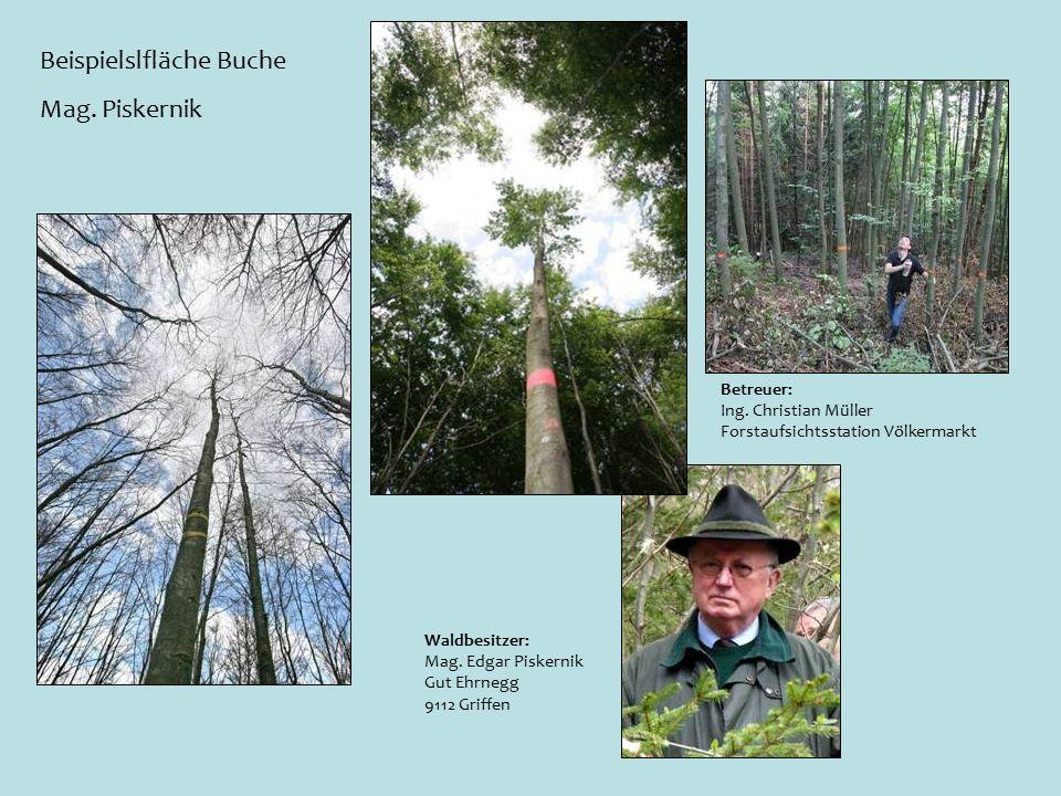 Beispielslfläche Buche Mag. Piskernik Waldbesitzer: Mag.