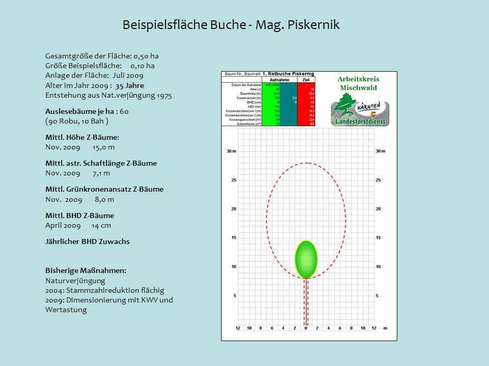 Beispielsfläche Buche - Mag.