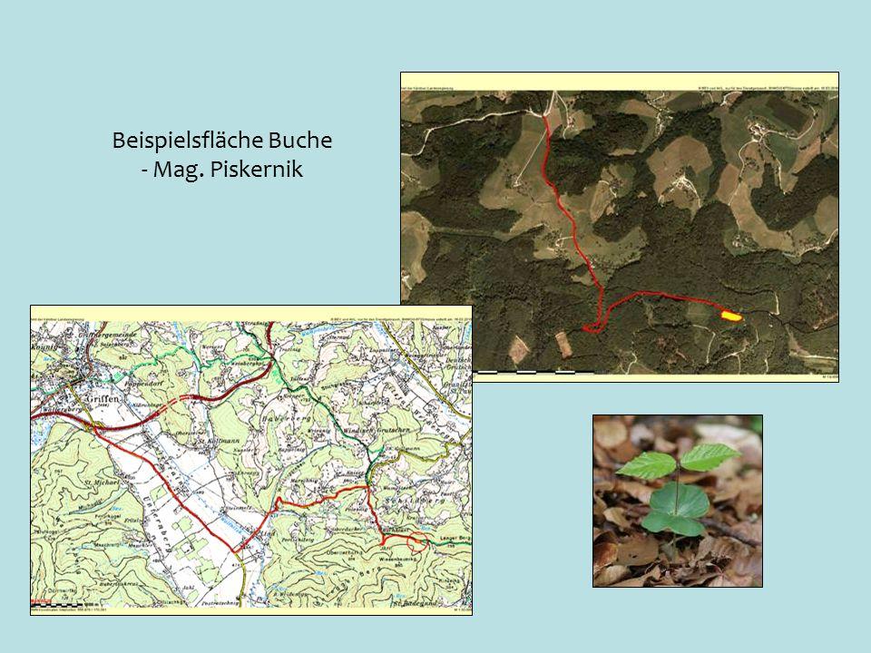 Beispielsfläche Buche - Mag. Piskernik