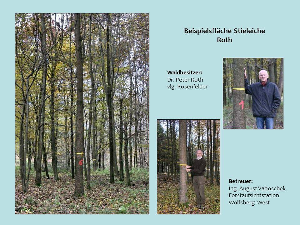 Beispielsfläche Stieleiche Roth Betreuer: Ing.