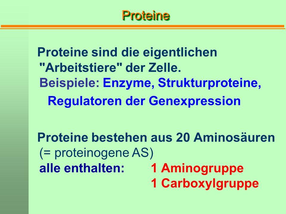 ProteineProteine Proteine sind die eigentlichen