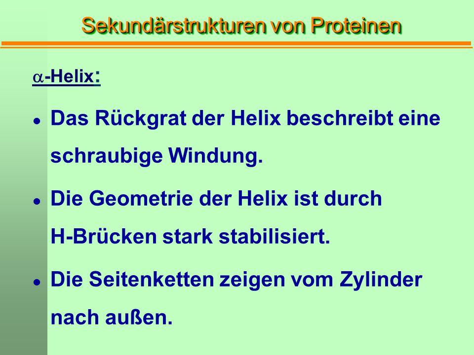Sekundärstrukturen von Proteinen  -Helix : l Das Rückgrat der Helix beschreibt eine schraubige Windung. l Die Geometrie der Helix ist durch H-Brücken