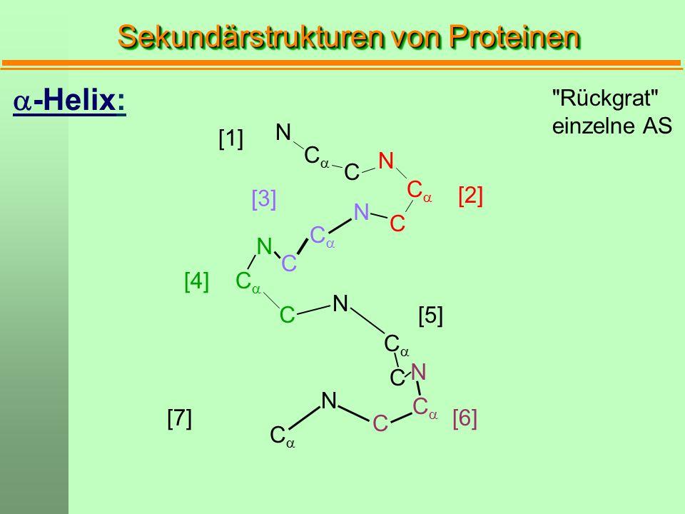 [1] CC CC CC C C C N N N CC CC CC CC N N N N C C C [2] [3] [4] [5] [6]  -Helix: