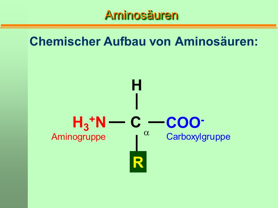 Chemischer Aufbau von Aminosäuren: H R H3+NH3+NC COO - Carboxylgruppe Aminogruppe AminosäurenAminosäuren