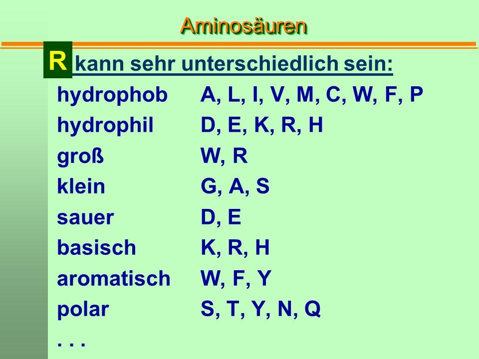 AminosäurenAminosäuren kann sehr unterschiedlich sein: hydrophobA, L, I, V, M, C, W, F, P hydrophilD, E, K, R, H großW, R kleinG, A, S sauerD, E basis