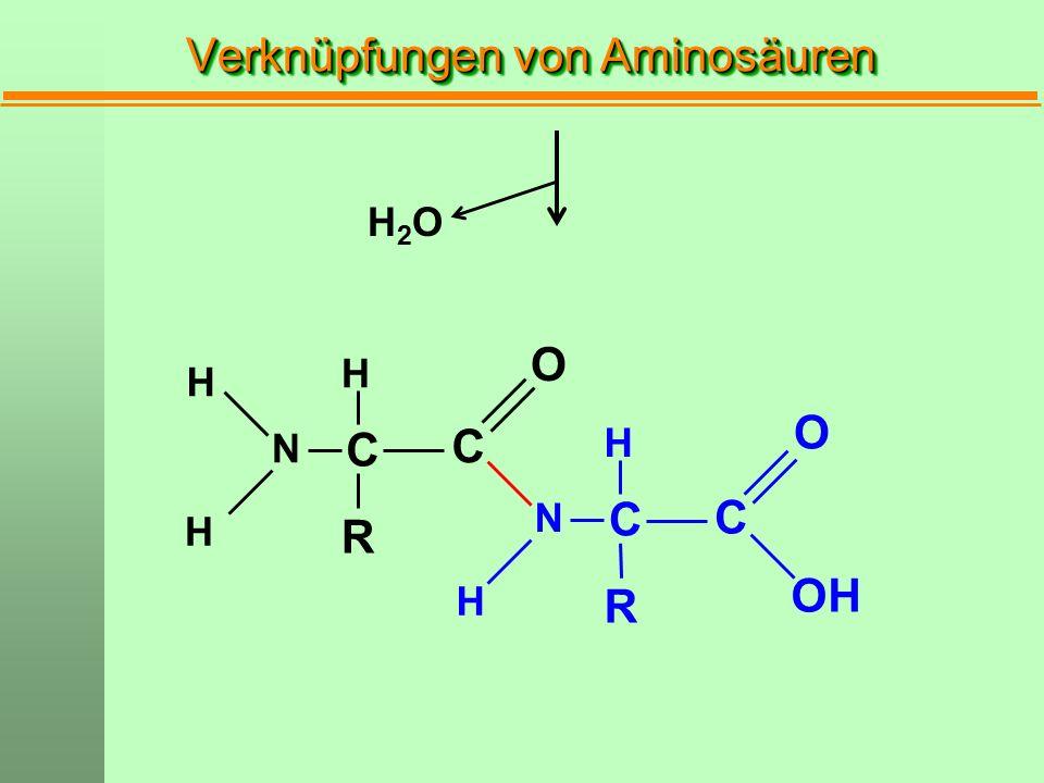 Verknüpfungen von Aminosäuren H2OH2O C N H H H R C O OH C C N H R O H