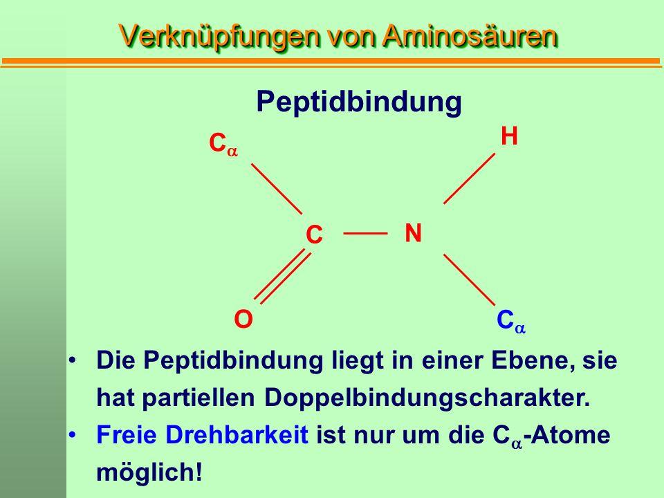 O CC C CC N H Peptidbindung Die Peptidbindung liegt in einer Ebene, sie hat partiellen Doppelbindungscharakter. Freie Drehbarkeit ist nur um die C