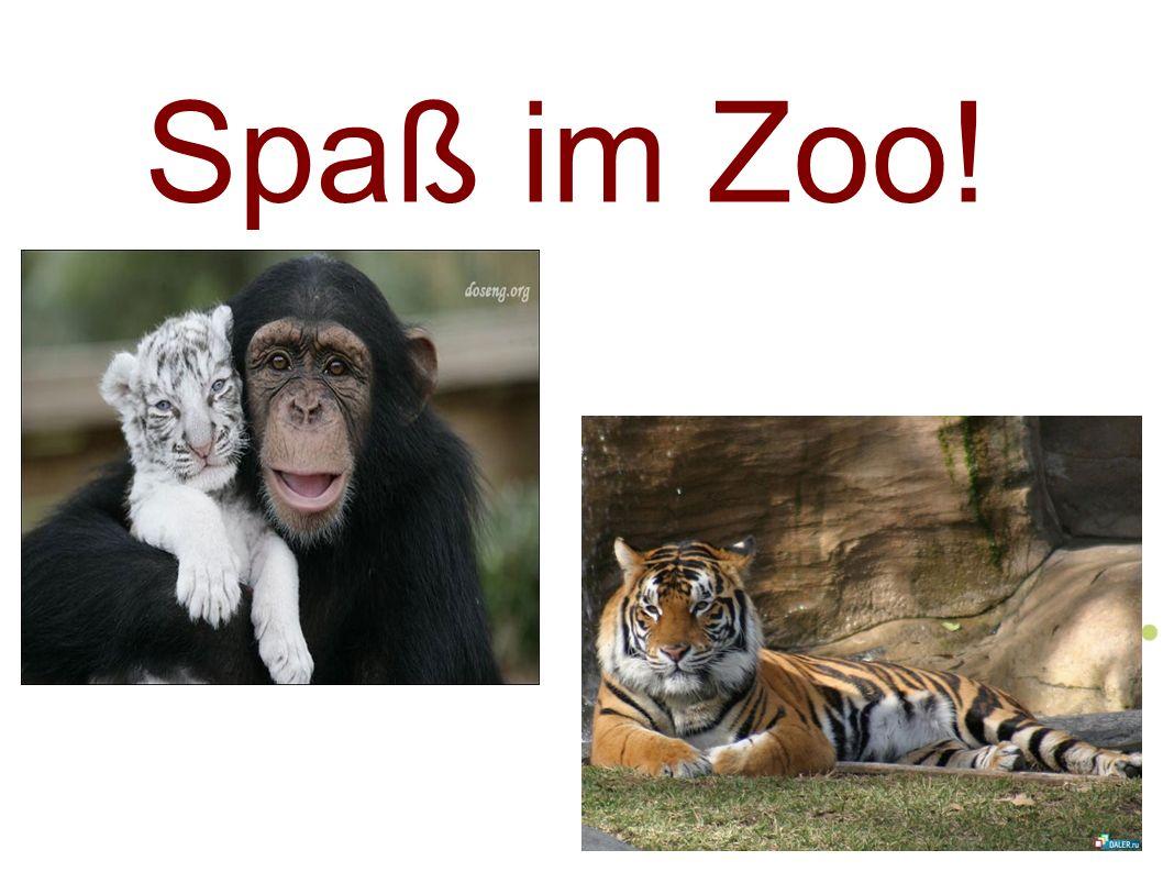Spaß im Zoo!