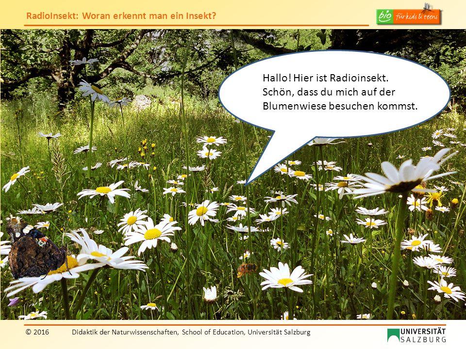 """RadioInsekt: Woran erkennt man ein Insekt? © 2016Didaktik der Naturwissenschaften, School of Education, Universität Salzburg """"RadioInsekt"""" Hallo! Hier"""