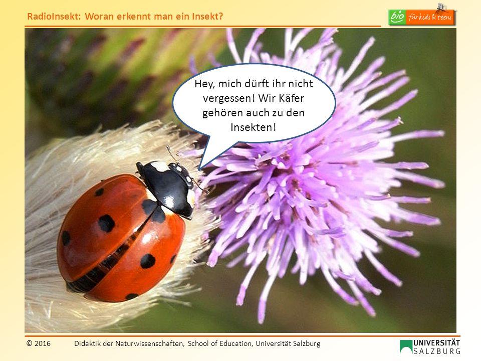 RadioInsekt: Woran erkennt man ein Insekt? © 2016Didaktik der Naturwissenschaften, School of Education, Universität Salzburg Hey, mich dürft ihr nicht