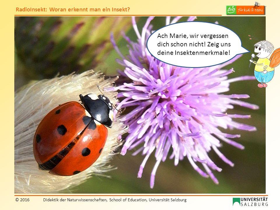 RadioInsekt: Woran erkennt man ein Insekt? © 2016Didaktik der Naturwissenschaften, School of Education, Universität Salzburg Ach Marie, wir vergessen
