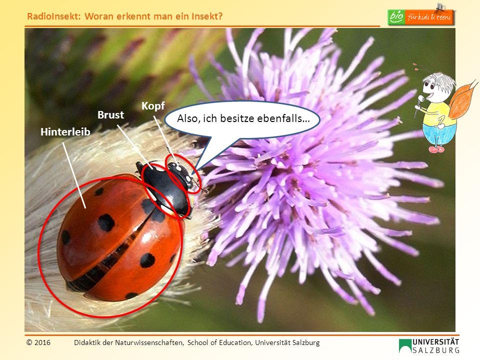 RadioInsekt: Woran erkennt man ein Insekt? © 2016Didaktik der Naturwissenschaften, School of Education, Universität Salzburg Also, ich besitze ebenfal