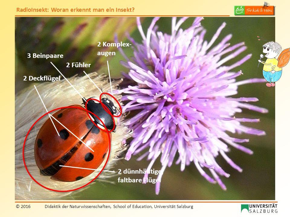 RadioInsekt: Woran erkennt man ein Insekt? © 2016Didaktik der Naturwissenschaften, School of Education, Universität Salzburg 2 Deckflügel 2 Fühler 2 K