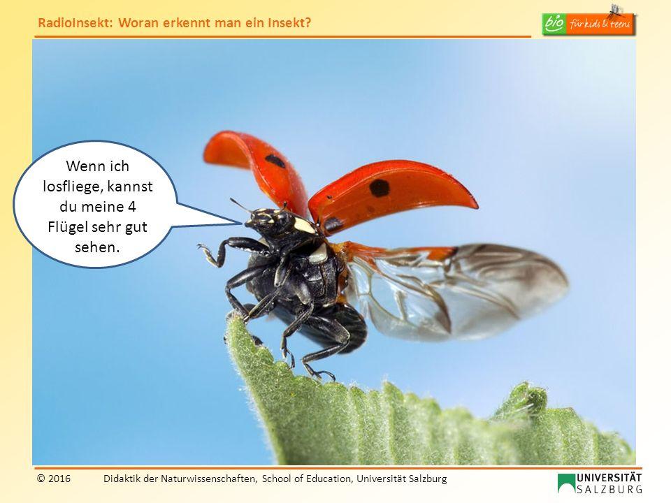 RadioInsekt: Woran erkennt man ein Insekt? © 2016Didaktik der Naturwissenschaften, School of Education, Universität Salzburg Wenn ich losfliege, kanns