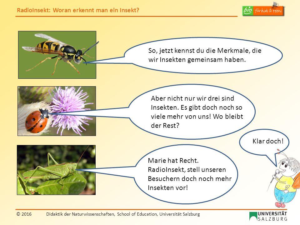 RadioInsekt: Woran erkennt man ein Insekt? © 2016Didaktik der Naturwissenschaften, School of Education, Universität Salzburg So, jetzt kennst du die M