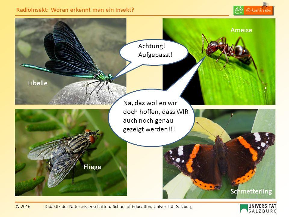 RadioInsekt: Woran erkennt man ein Insekt? © 2016Didaktik der Naturwissenschaften, School of Education, Universität Salzburg Na, das wollen wir doch h