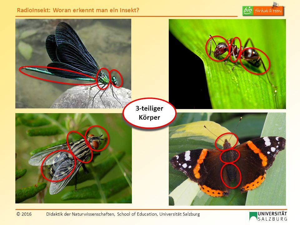 RadioInsekt: Woran erkennt man ein Insekt? © 2016Didaktik der Naturwissenschaften, School of Education, Universität Salzburg 3-teiliger Körper