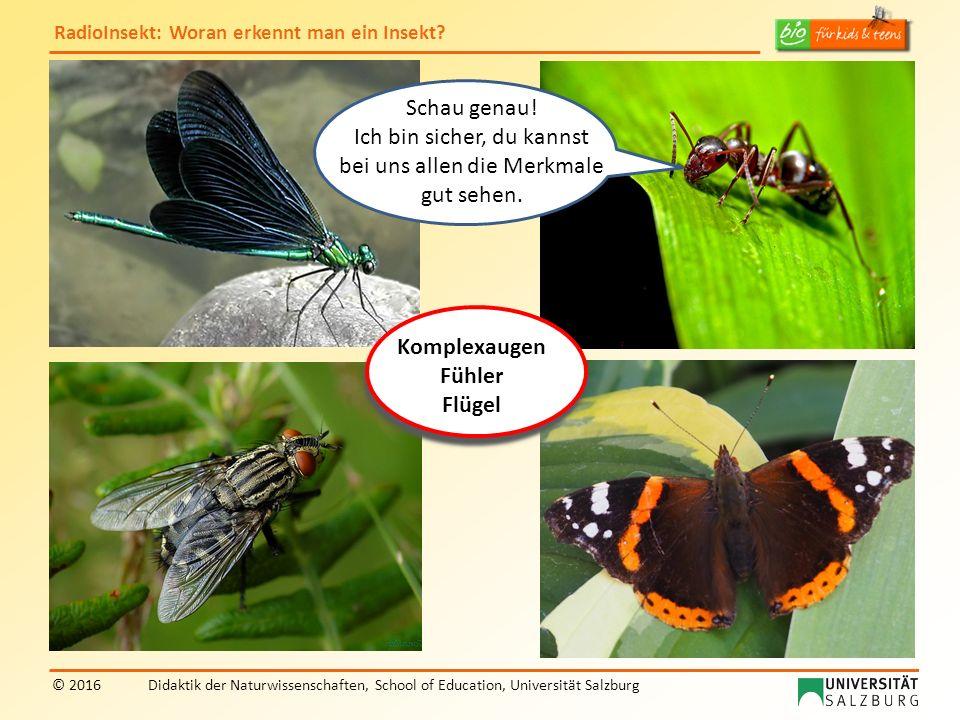 RadioInsekt: Woran erkennt man ein Insekt? © 2016Didaktik der Naturwissenschaften, School of Education, Universität Salzburg Komplexaugen Fühler Flüge