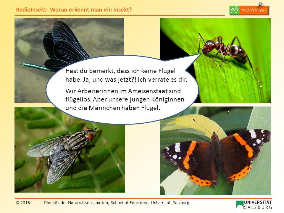RadioInsekt: Woran erkennt man ein Insekt? © 2016Didaktik der Naturwissenschaften, School of Education, Universität Salzburg Hast du bemerkt, dass ich