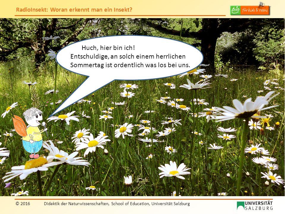 """RadioInsekt: Woran erkennt man ein Insekt? © 2016Didaktik der Naturwissenschaften, School of Education, Universität Salzburg """"RadioInsekt"""" Huch, hier"""